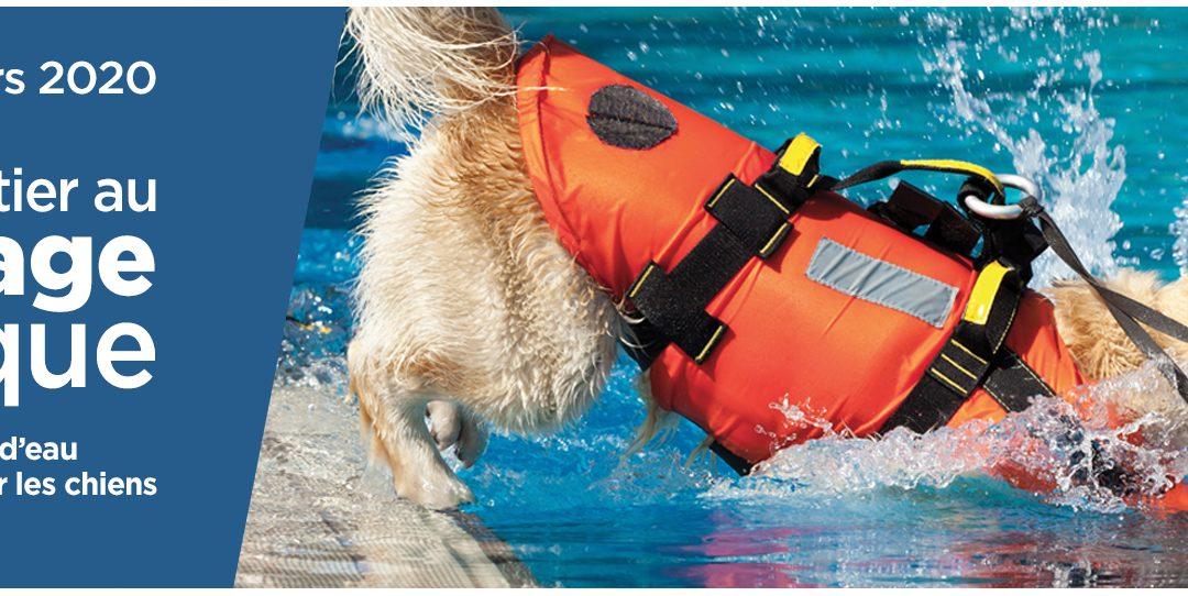 Sauvetage aquatique